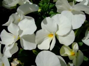 Die Blumensprache ist sehr vielfältig.