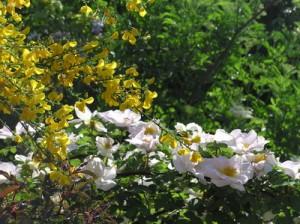 Bei Gartenpflanzen gibt es eine große Auswahl.